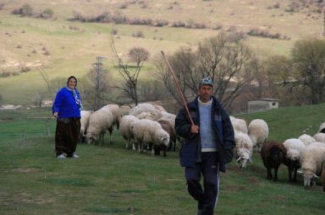 Zdjęcia: na trasie Burgas-Warna, okolice Burgas, Pasterze, BUłGARIA