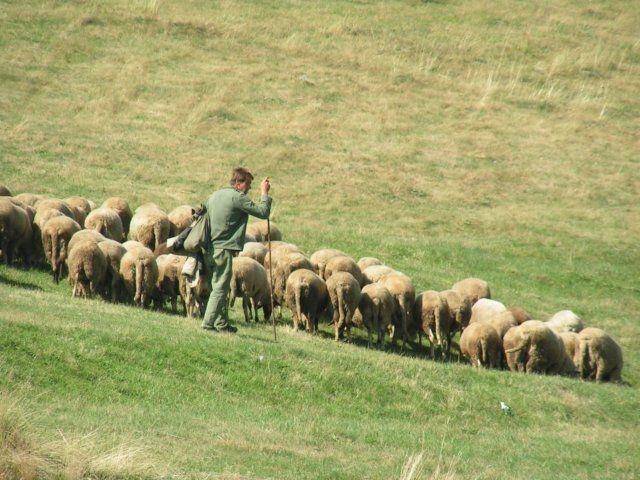Zdj�cia: Dospat, Rodopy, Pasterz z owcami, BU�GARIA