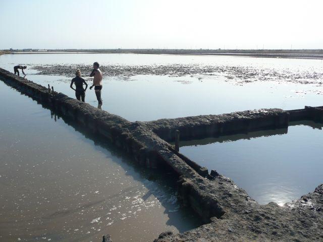 Zdjęcia: dzika plaża z błotkiem, gdzieś, Bułgarskie spa, BUłGARIA