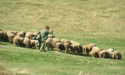 Zdjecie BUłGARIA / Rodopy / Dospat / Pasterz z owcami