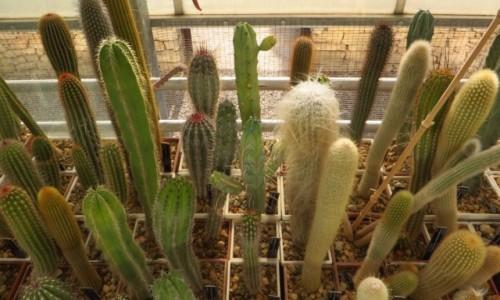 Zdjecie BUłGARIA / okolice Warny / Bałczik / ogród botaniczny kolekcja kaktusów