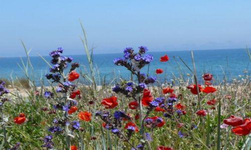 Zdjecie BUłGARIA / w pobliżu Sozopolu / złote piaski w Bułgarii / nad brzegiem Morza Czarnego
