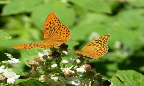 BUłGARIA / - / Bełogradczik / Motyle