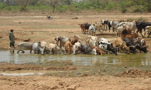 Zdjęcie BURKINA FASO / Poni / Loropeni / U wodopoju