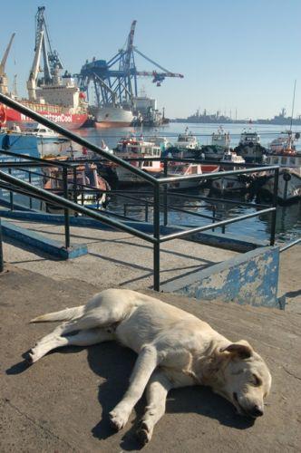Zdjęcia: Valparaiso, Wybrzeże Pacyfiku, Dog-lands, CHILE