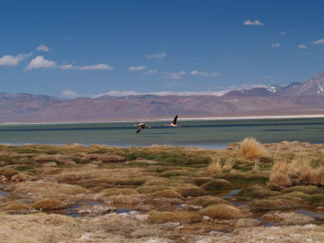Zdjęcia: Pustynia Atacama, droga pod Ojos del Salado, Laguna Santa Rosa, CHILE