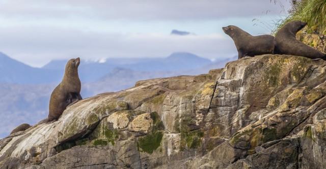 Zdjęcia: Cieśnina Magellana, Punta Arenas, Lwy z morza, CHILE