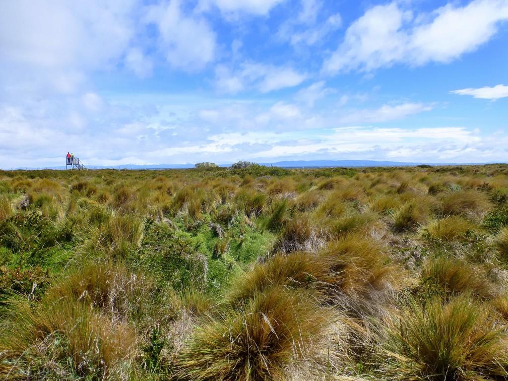 Zdjęcia: Seno Otway, Patagonia,  pustka, wiatr i trawy, CHILE