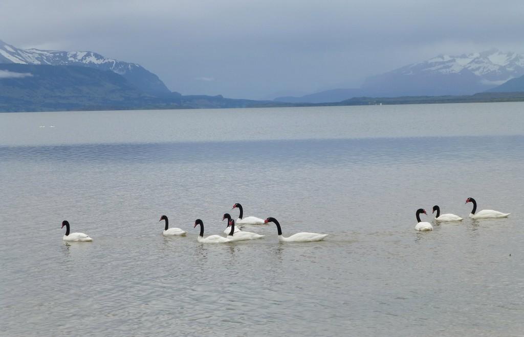Zdjęcia: Puerto Natales, Patagonia, La Ultima Esperanza, CHILE