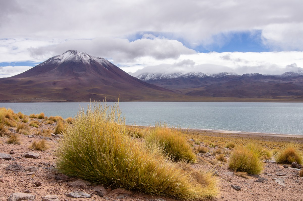 Zdjęcia: Atacama, Atacama, Laguna Miscanti, CHILE