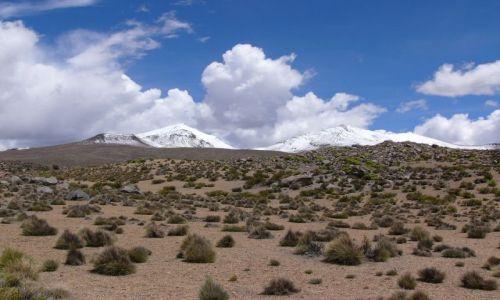 CHILE / Region XV / PN Lauca / Altiplano
