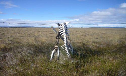 Zdjecie CHILE / Patagonia / W drodze do Parku Torres del Paine / Tragedia Patagońska