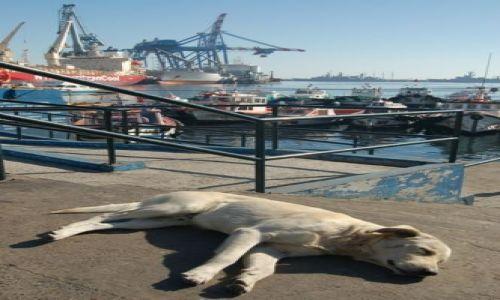 Zdjęcie CHILE / Wybrzeże Pacyfiku / Valparaiso / Dog-lands