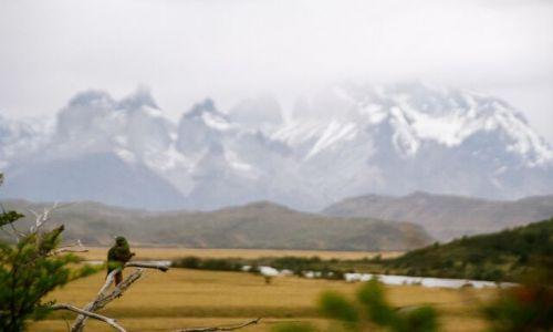 Zdjecie CHILE / brak / Torres del Paine / Papużka w Torres del Paine