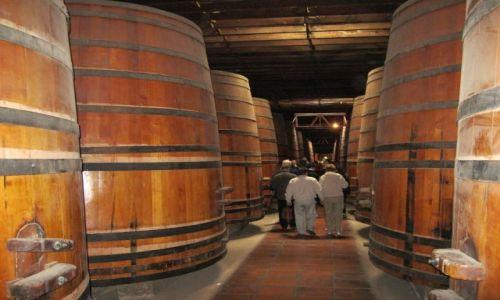 Zdjecie CHILE / - / Dolina Maipo / Winiarnia