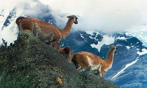 Zdjecie CHILE / Patagonia / Masyw Paine / spotkanie w gorach