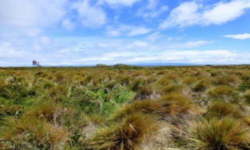 Zdjecie CHILE / Patagonia / Seno Otway /  pustka, wiatr i trawy