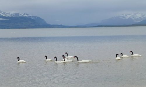 Zdjęcie CHILE / Patagonia / Puerto Natales / La Ultima Esperanza
