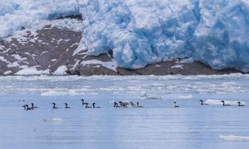 CHILE / Punta Arenas / Cieśnina Magellana / U czoła lodowca w Cieśninie Magellana