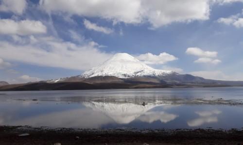 Zdjęcie CHILE / NP Lauca / Lago Chungara / Parinacota 6348 m npm