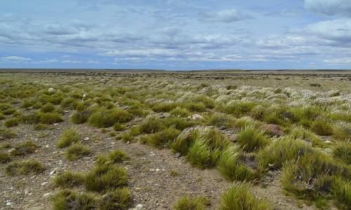 Zdjecie CHILE / Patagonia / gdzieś po drodze / W stepie szerokim... patagońskim