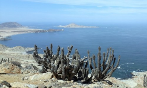 Zdjecie CHILE / Pogranicze regionów Atacama i Antofagasta / NP Pan de Azucar / Dzikie wybrzeże