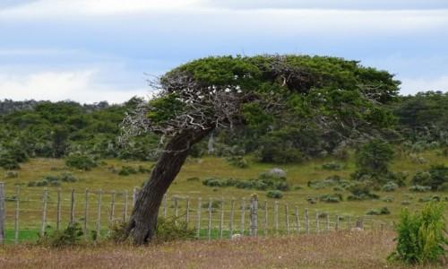 CHILE / Patagonia- region Magallanes / gdzieś po drodze / Uformował je wiatr