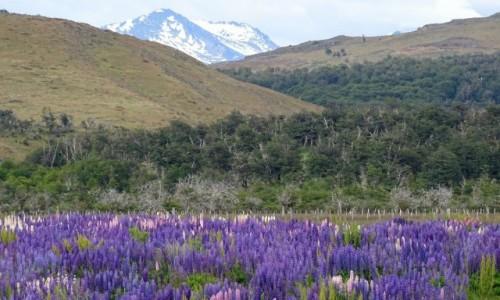 CHILE / Patagonia- region Magallanes / okolice Puerto Natales / Chocho