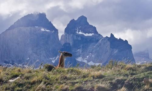 CHILE / Patagonia / NP Torres del Paine / Za Madam :-) Peryskop.