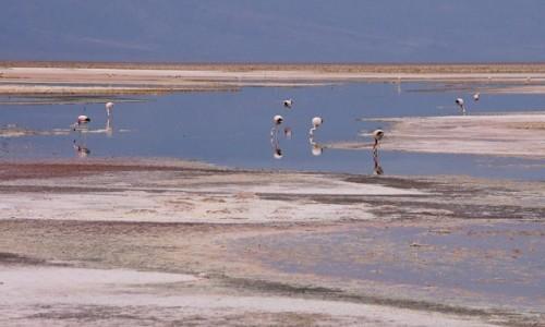 Zdjecie CHILE / Pustynia Atacama / Laguna Chaxa / Dzień pochmurny też ma swój urok ;-)