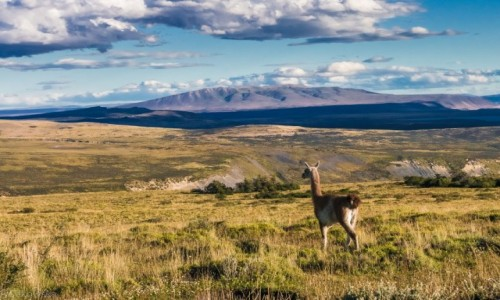 CHILE / Patagonia / NP Torres del Paine / Do zobaczenia
