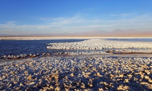 Zdjęcie CHILE / Atacama / Laguna Cejar / Solidnie zasolona