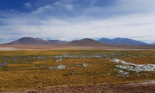 Zdjęcie CHILE / Atacama / Vado del  Rio Putana / Pustynia a jednak....