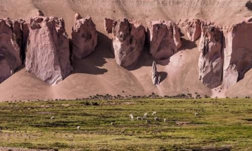 Zdjecie CHILE / Arica y Parinacota / Lauka NP / Kolacja w cieniu szczęki olbrzyma