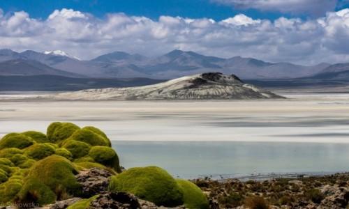 Zdjęcie CHILE / Arica y Parinacota / Salar de Surire / Na salarze
