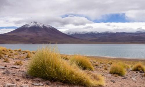 Zdjecie CHILE / Atacama / Atacama / Laguna Miscanti