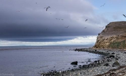 Zdjecie CHILE / Patagonia / Isla Magdalena / Na pingwiniej wyspie