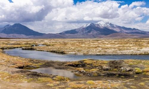 Zdjecie CHILE / Atacama / Salar de Surire / Na pustyni Atacama