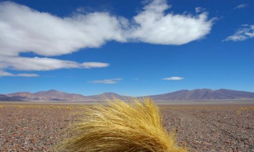 Zdjecie CHILE / Atacama  / Atacama / Atacama The Gre