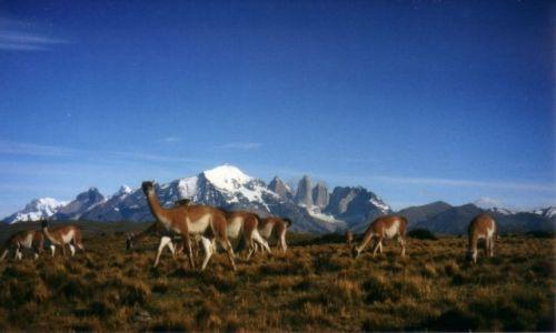Zdjecie CHILE / Pd. Chile / Torres del Paine / Wikunie pod Torres del Paine