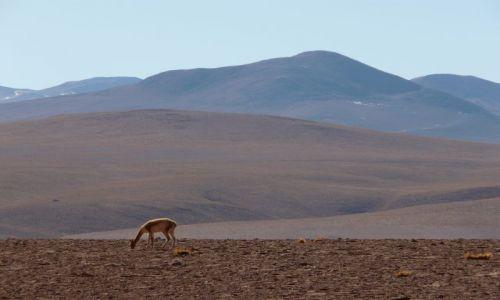 CHILE / - / El Tatio Geysers / krajobraz
