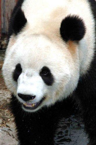 Zdjęcia: pekin, chińska maskotka_2, CHINY