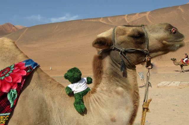 Zdjęcia: Pustynia, Badain Jaran, Misio na pustyni, CHINY