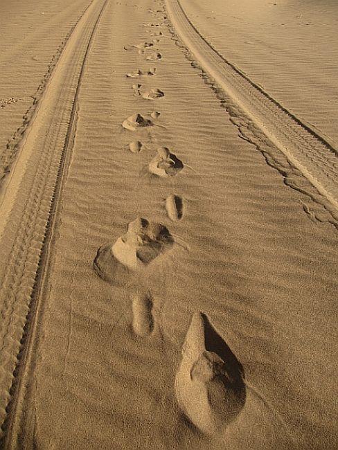 Zdjęcia: pustynia, Badain Jaran, Życie na pustyni jednak się toczy, CHINY