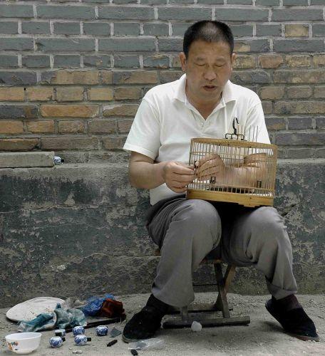 Zdjęcia: pekin, ptasznik, CHINY