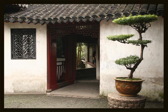 Zdjęcia: Szanghaj, bonsai, CHINY