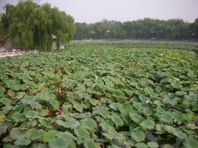 Zdjęcia: Pekin i okolice, Pekin, CHINY