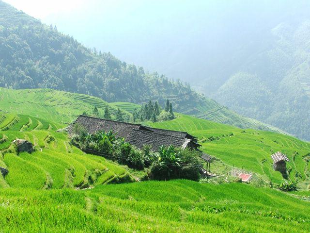 Zdjęcia: Tarasowe pola ryżowe Longji Titan, Tarasowe pola ryżowe, CHINY