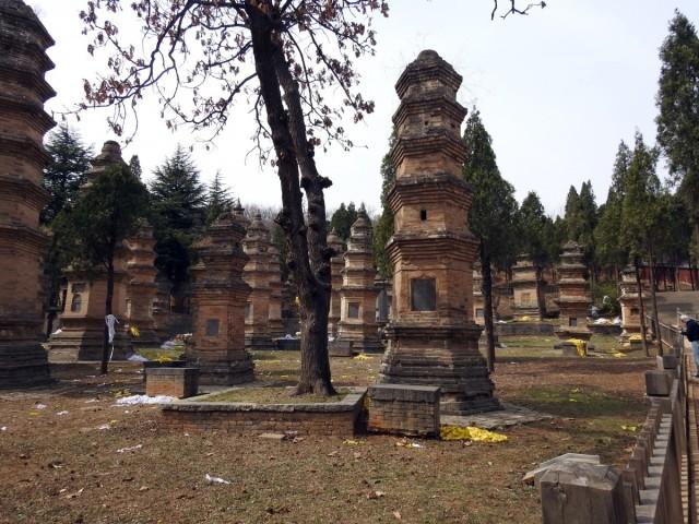 Zdjęcia: Dengfeng, Luoyang, Las pagód, CHINY