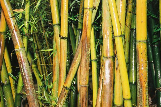 Zdjęcia: Changdu, Bambusowe krolestwo, CHINY